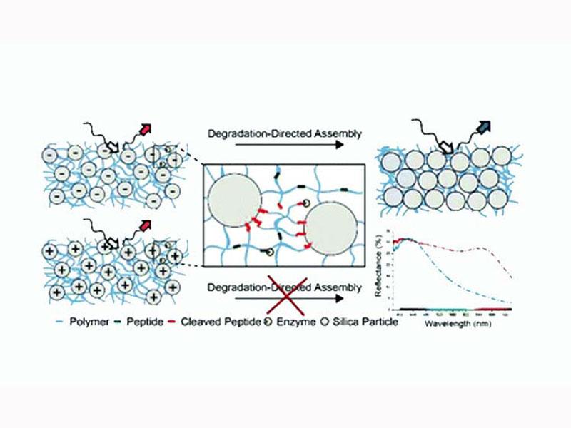 Publication in Nanoscale